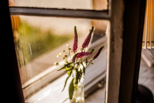 Blumen_Fensterbrett