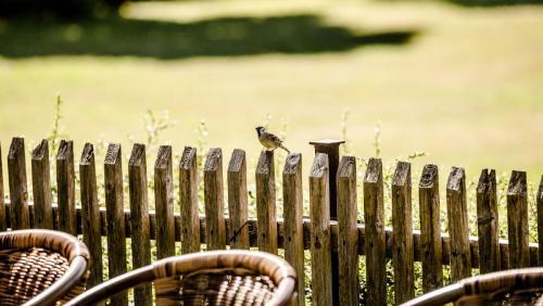 Vögel_auf_dem_Zaun